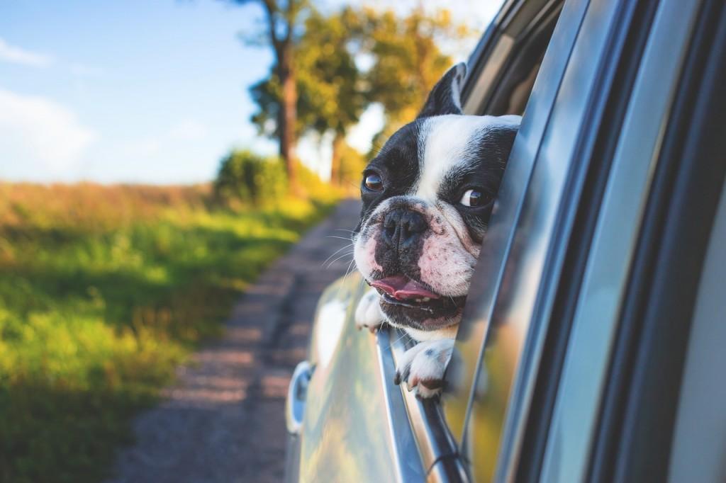 help-dogs-adjust