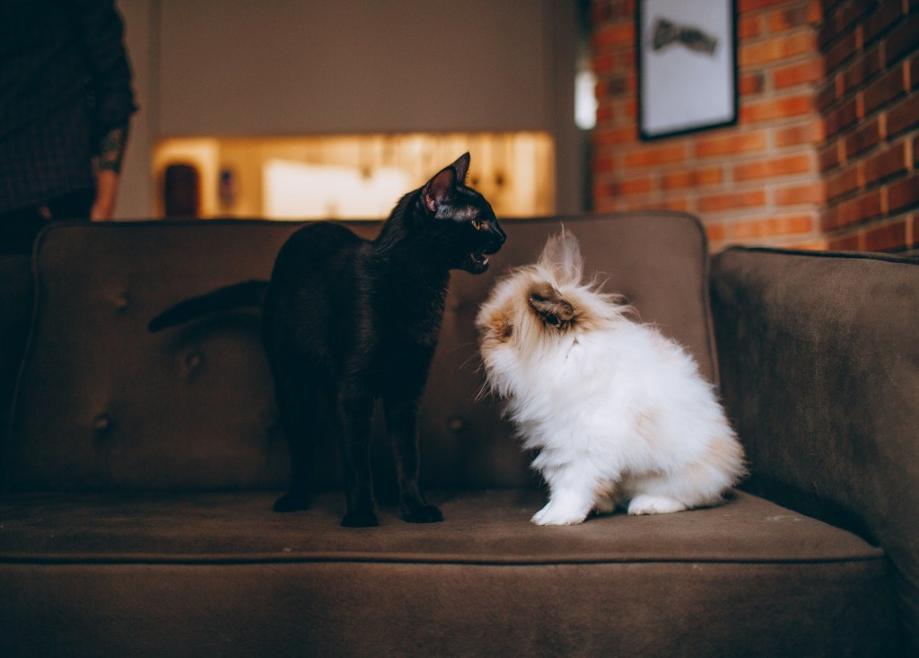 There are movers who are experts in helping you move with your pets. Hiring them would be the best idea. It will definitely help the move for your beloved pets less traumatic.